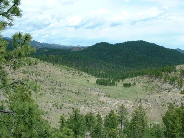 Black_hills_fire_recovery